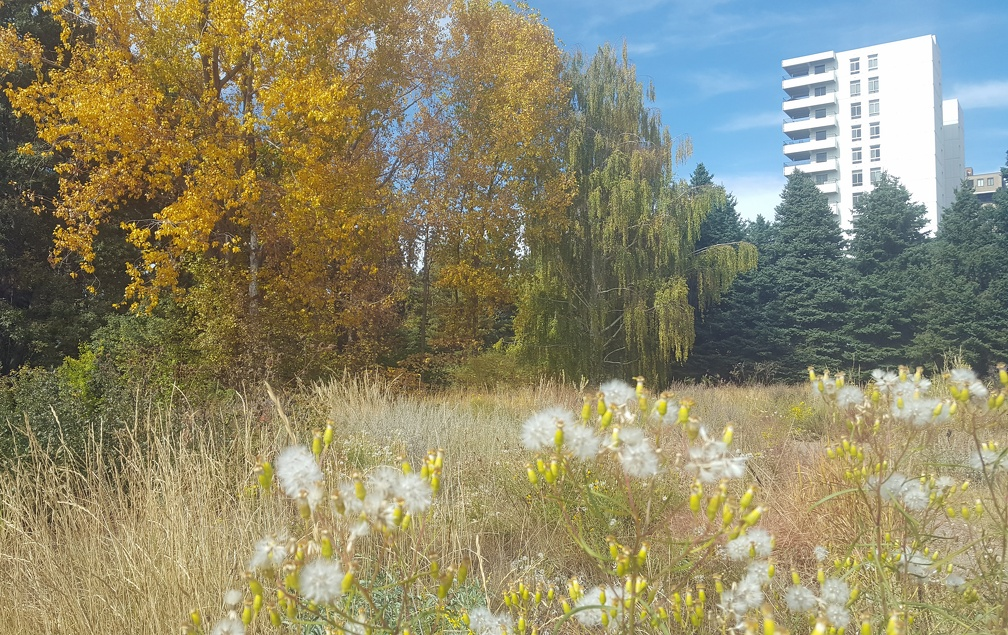 The garden is nestled in nearish to downtown. I liked seeing the building rise nearby.