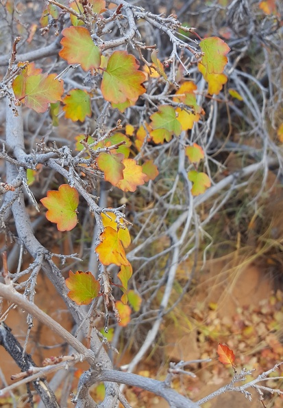 Autumn in Miniature.