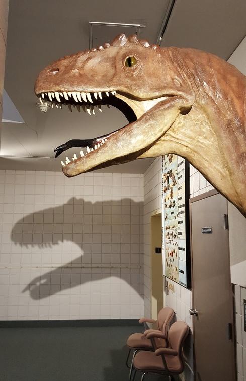 Dinosaur Bust!