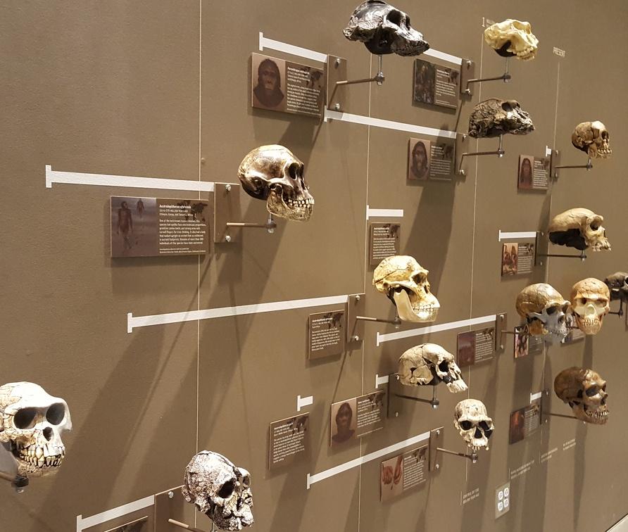 Wall of Skull.
